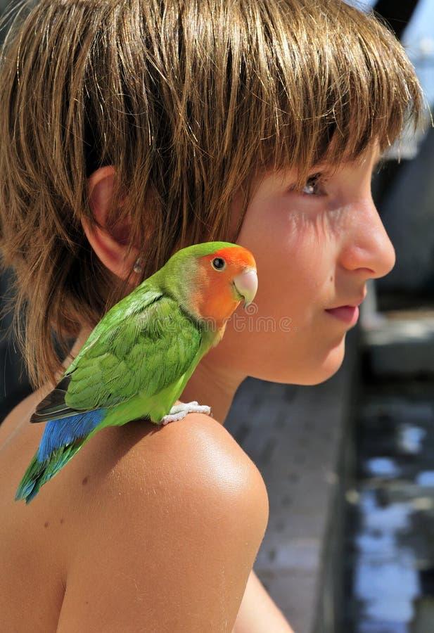 Bambino con il pappagallo miniatura fotografie stock libere da diritti