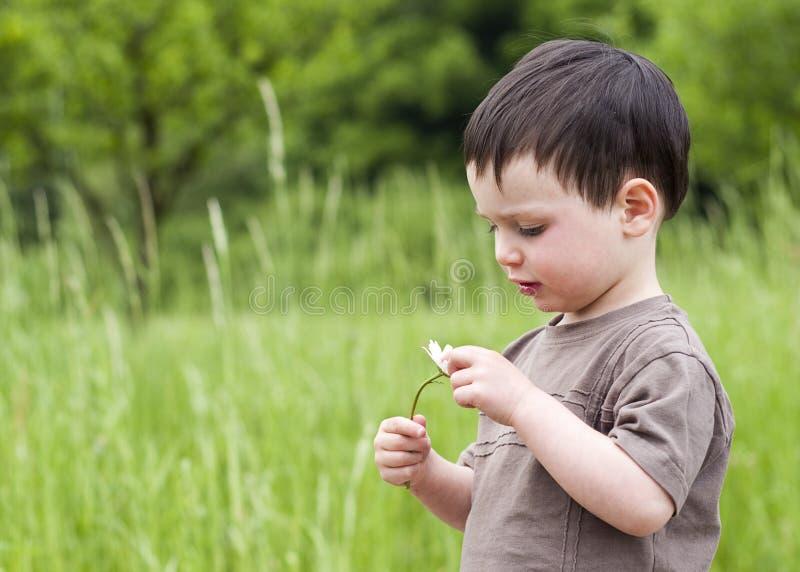 Bambino con la margherita fotografie stock libere da diritti