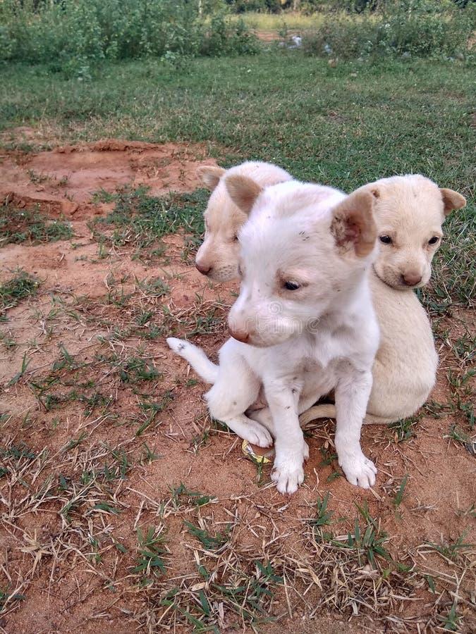 Bambino del cane fotografia stock