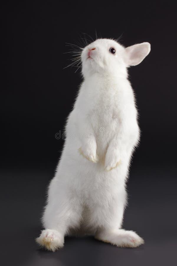 Bambino del coniglio fotografia stock