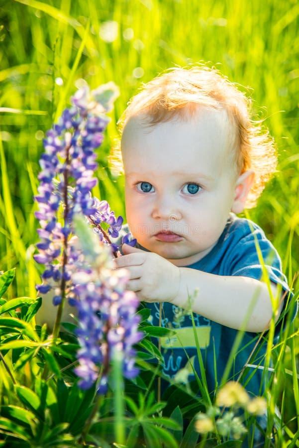 Bambino del bambino in un prato del lupino selvatico immagini stock libere da diritti