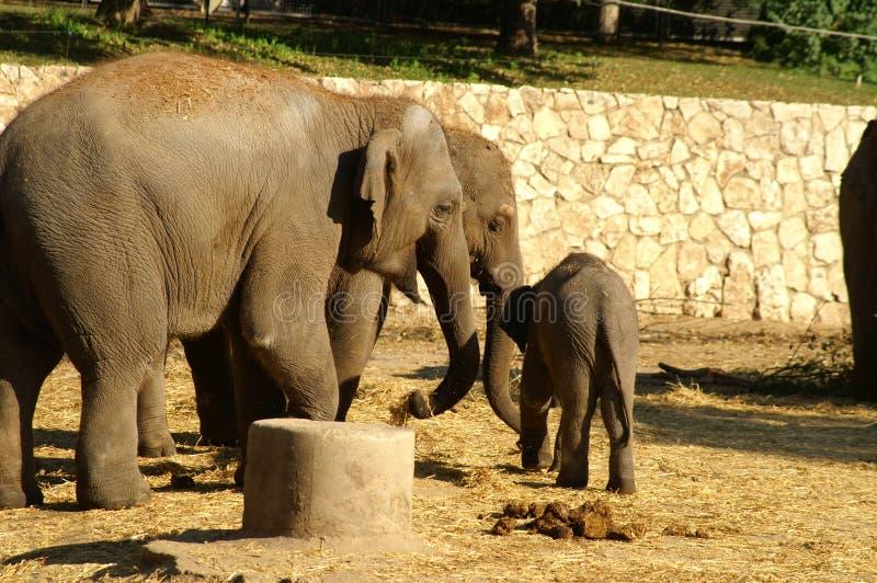 Bambino dell 39 elefante con la madre fotografia stock - Elefante foglio di colore dell elefante ...