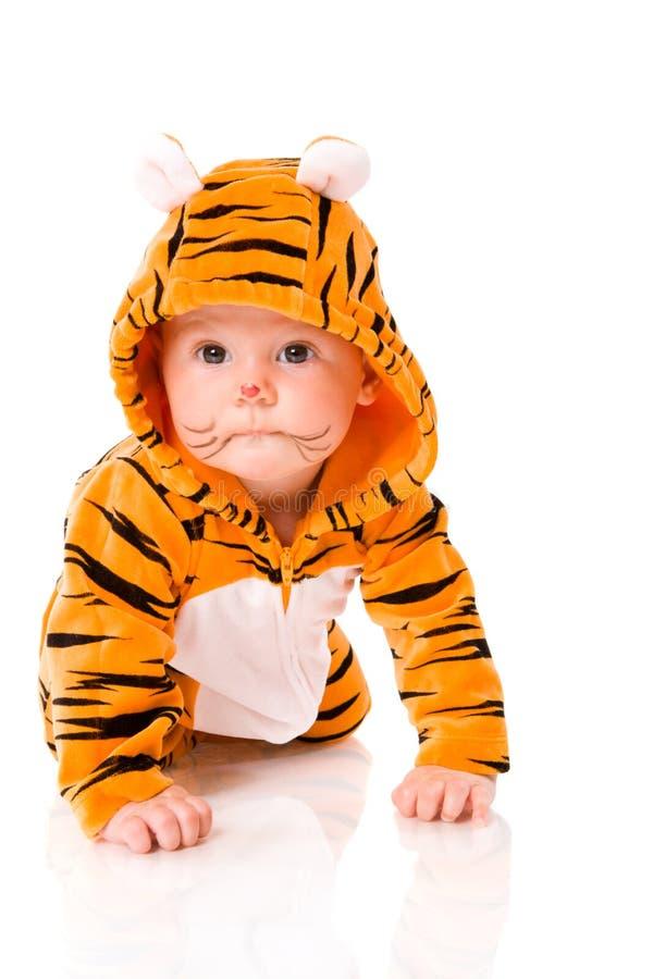 Bambino della tigre fotografie stock