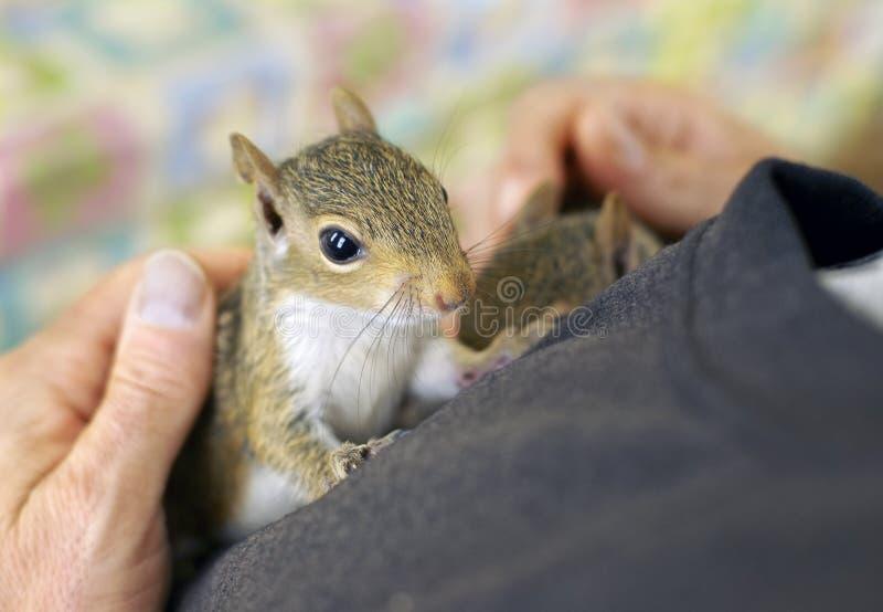 Bambino dello scoiattolo fotografia stock libera da diritti