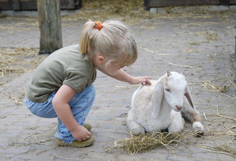 Bambino e piccola capra 1 immagine stock libera da diritti