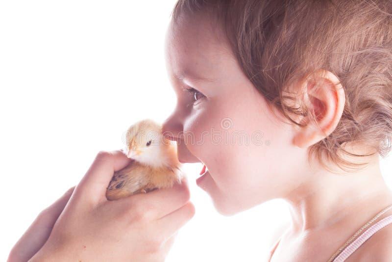 Bambino felice e piccolo pollo fotografia stock