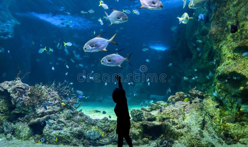 Bambino felice osservando i pesci ad un grande acquario fotografia stock