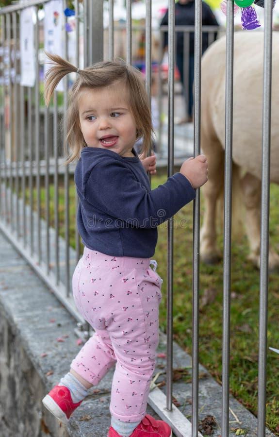 Bambino girl osservare pony cute zoo immagini stock libere da diritti