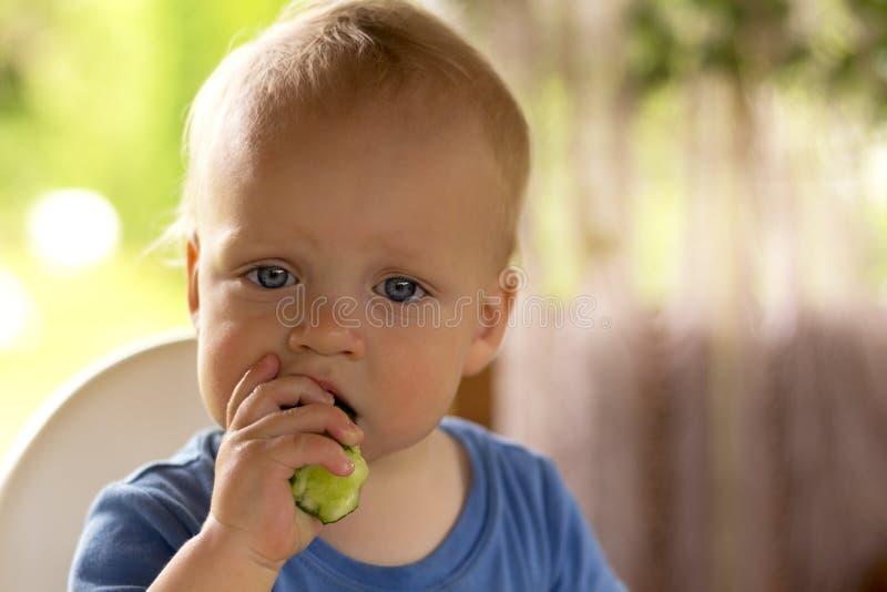 Bambino infantile favorito serio che mangia cetriolo fotografia stock libera da diritti