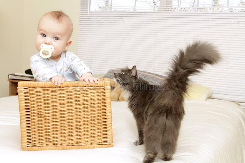 Bambino nel paese con il gatto fotografia stock libera da diritti