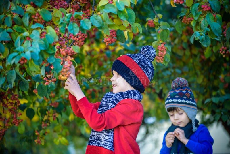 Bambino su un'azienda agricola in autunno Ragazzino ed il suo amico del fratello che giocano nel frutteto decorativo di melo Frut fotografie stock