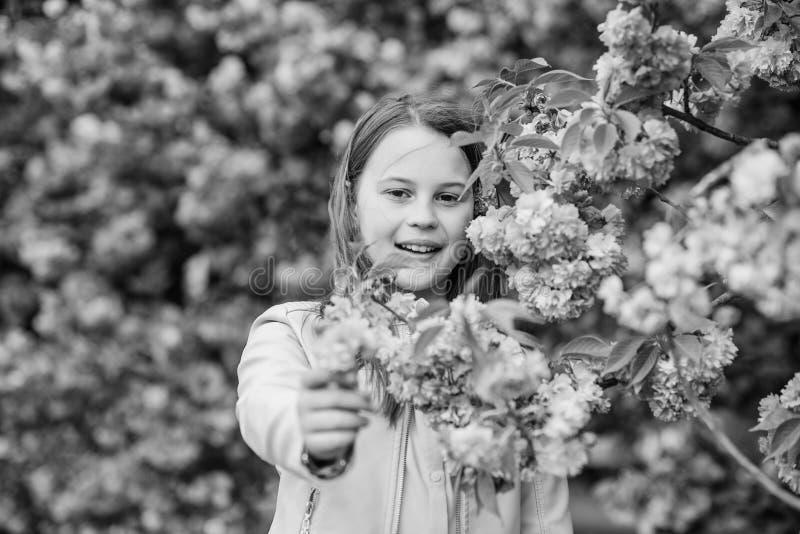 Bambino sul fondo rosa dell'albero di sakura dei fiori Rimedio di allergia Il bambino gode della vita senza allergia Fiori di fiu fotografia stock libera da diritti