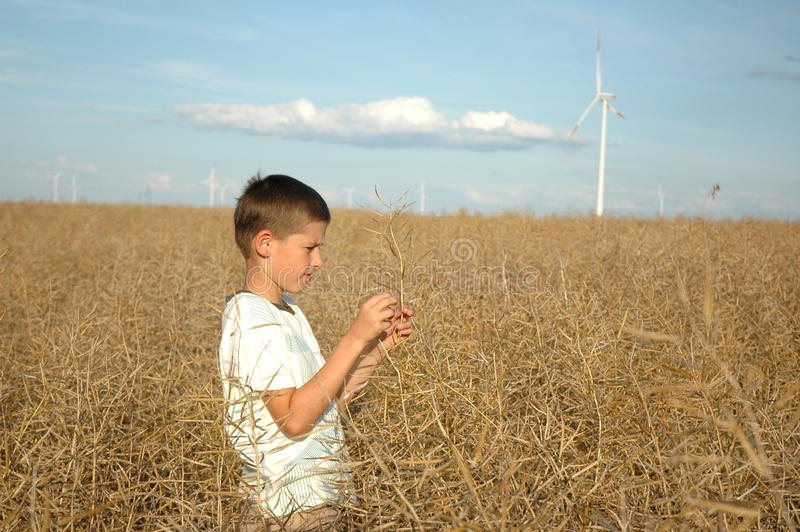 Bambino sulle centrali elettriche del ofwind del campo fotografia stock