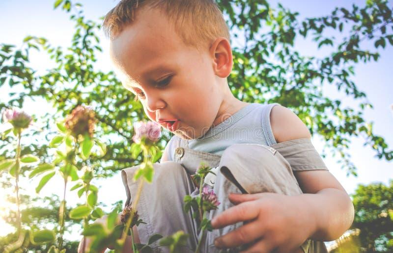 Bambino sveglio che gode del prato di estate fotografia stock libera da diritti