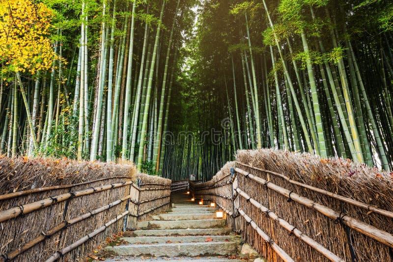 Bambo grove, Arashiyama. Bambo grove at Adashino Nenbutsuji Temple with fall colors in Arashiyama, Kyoto, Japan stock images