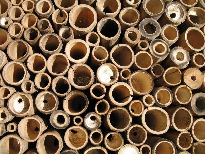 Bamboe stock fotografie