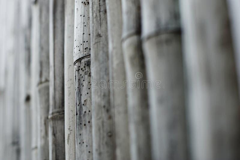 Download Bamboe stock foto. Afbeelding bestaande uit thailand - 39108980
