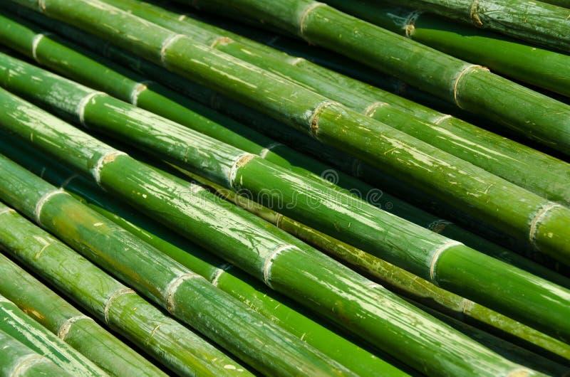 Bamboe-02 royalty-vrije stock fotografie