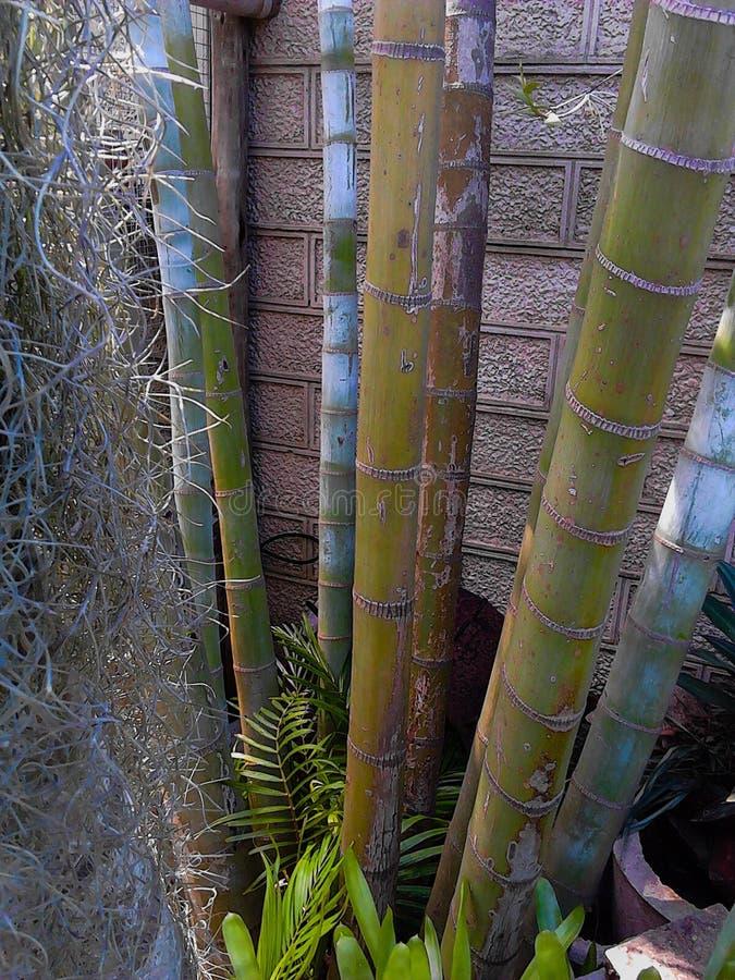 Bamboe stock afbeeldingen