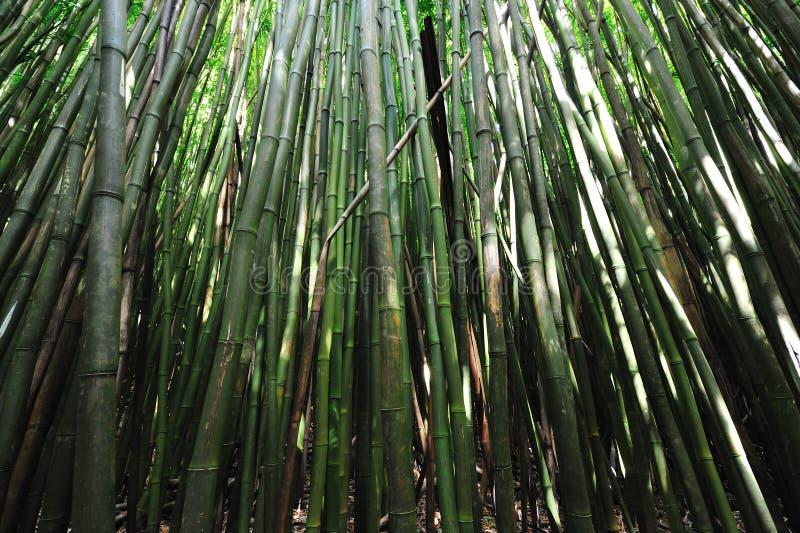 Bamboe BosMaui, Hawaï royalty-vrije stock fotografie