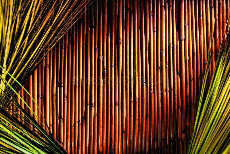 Bamboe en de Groene Achtergrond van het Gras royalty-vrije stock afbeeldingen