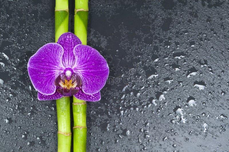 Bamboe en orchidee op zwarte achtergrond royalty-vrije stock afbeeldingen