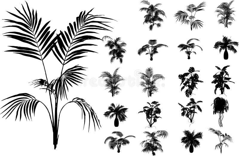 Bamboe en tropische installatie vector illustratie