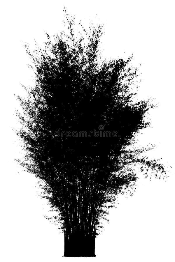 Bamboe Geïsoleerde zwarte boomsilhouetten op witte achtergrond royalty-vrije stock foto