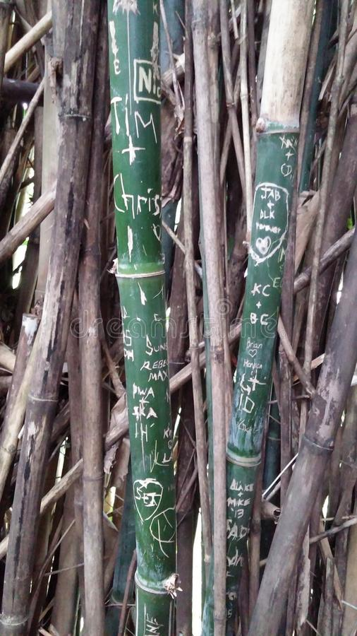 Bamboe Graffiti stock foto
