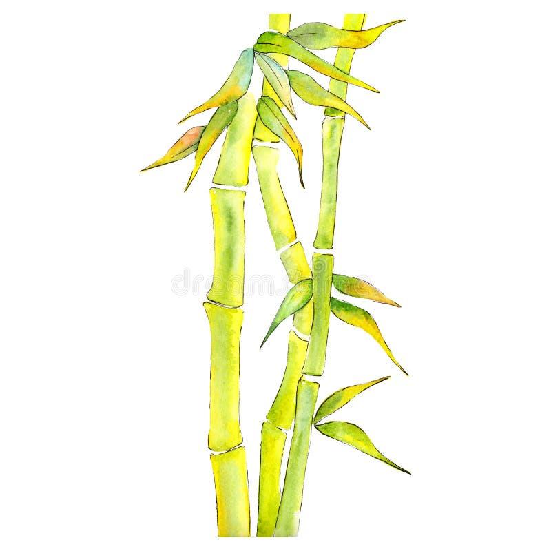 Bamboe Groene bladeren en stoom Waterverf achtergrondillustratiereeks Het geïsoleerde element van de bamboeillustratie stock illustratie