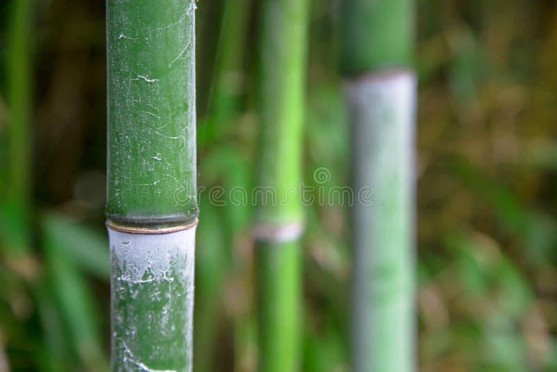 Bamboe groene bosachtergrond stock afbeeldingen