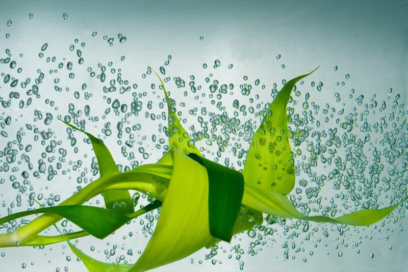 Bamboe in het water stock fotografie