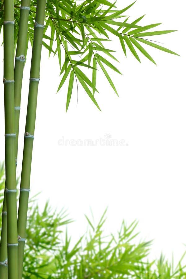 Bamboe met bladeren