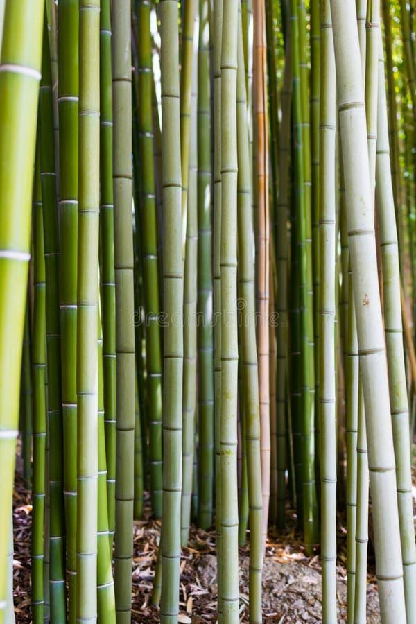 Bamboeachtergrond stock foto's