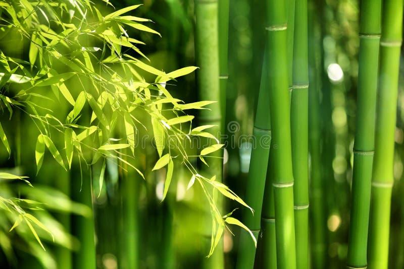 Bamboebos royalty-vrije stock fotografie