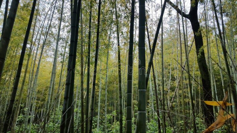 Bamboebos dichtbij Kyoto stock fotografie