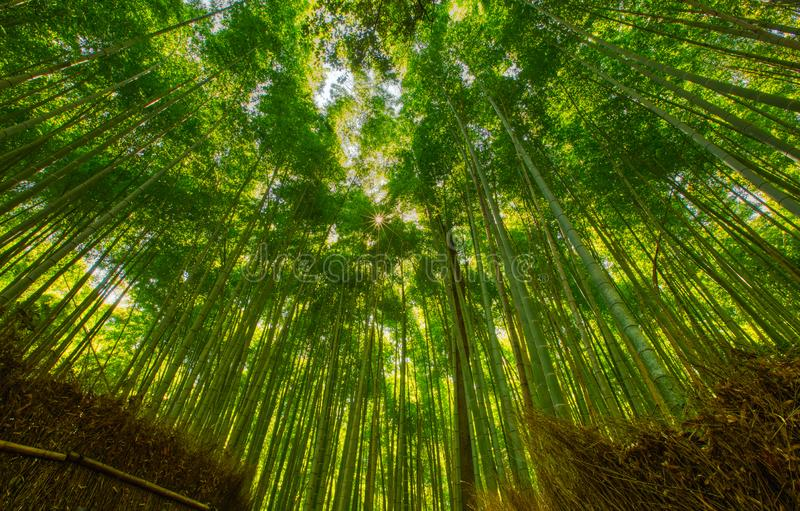 Bamboebos en het lopen weg in Arashiyama, Kyoto, Japan royalty-vrije stock afbeeldingen