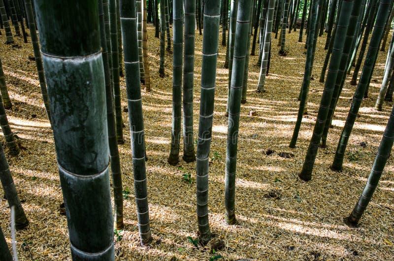 Bamboebos van Arashiyama royalty-vrije stock foto