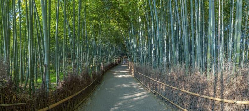 Bamboebosje in Kyoto royalty-vrije stock afbeelding