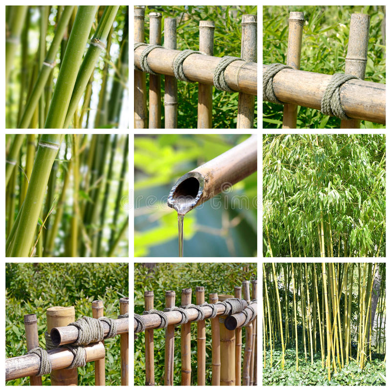 Bamboecollage stock afbeeldingen