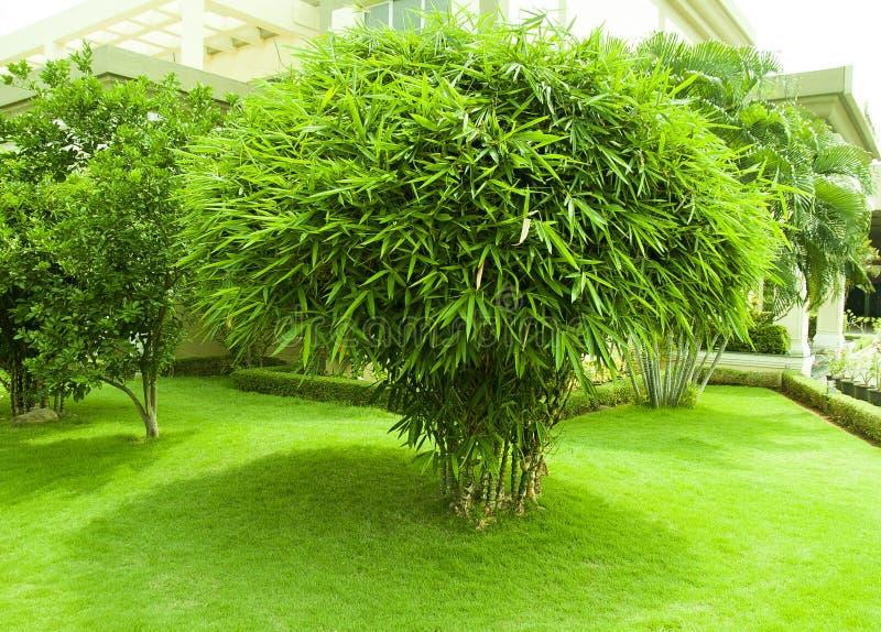 Bamboeinstallatie en groene grastuin royalty-vrije stock afbeeldingen
