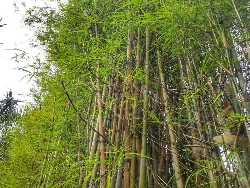 Bamboemassa stock foto