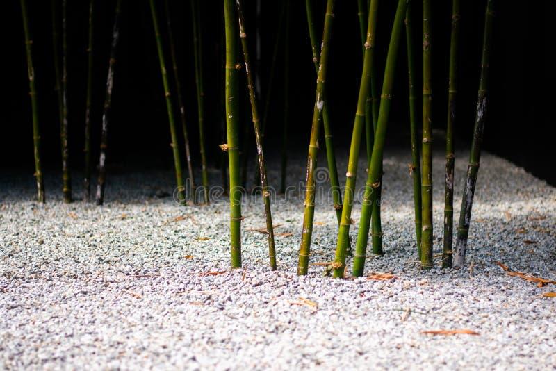 Bamboespruiten in Zen Garden stock foto's