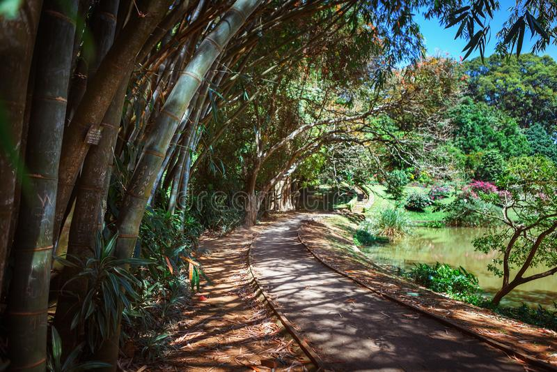 Bamboesteeg, gangweg en bank in Koninklijke Botanische Koning Gardens Peradeniya kandy Sri Lanka stock afbeeldingen