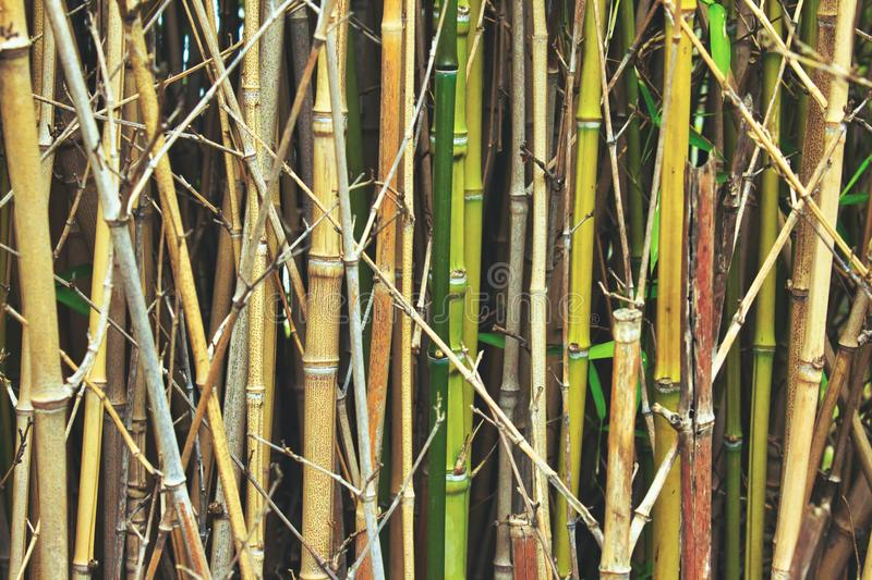 Bamboestelen en riet in het boskreupelhout royalty-vrije stock foto's