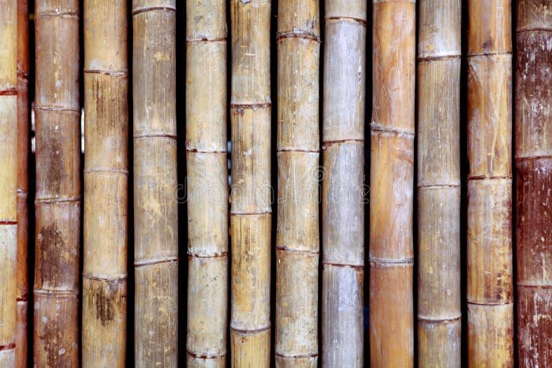 Bamboetextuur stock afbeeldingen