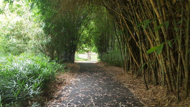 Bamboetunnel stock afbeeldingen