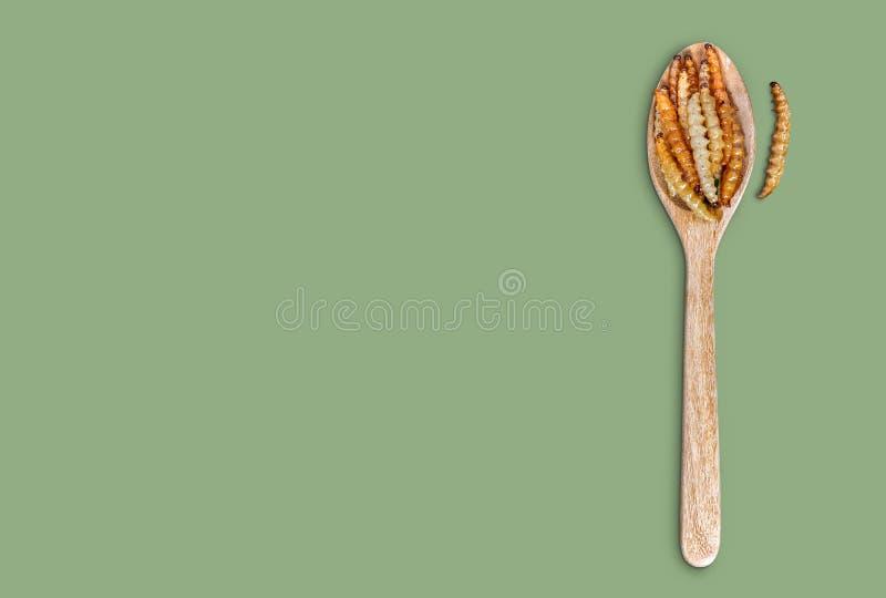 Bamboo ätlig mask insekter av crispy eller Bamboo Caterpelare i träsked på grön bakgrund royaltyfri fotografi