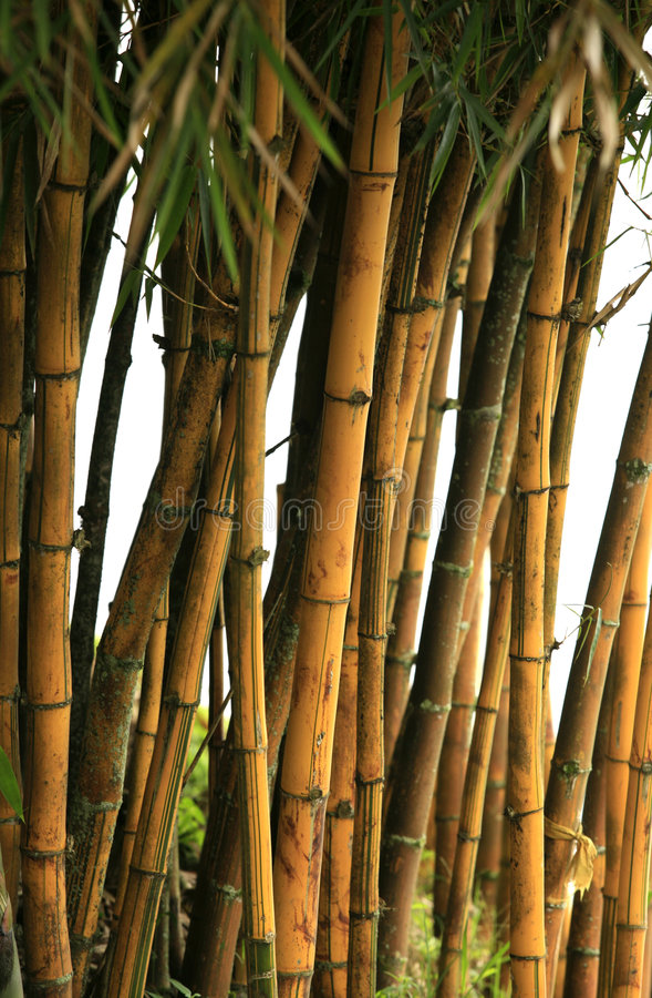 bamboo валы стоковое фото