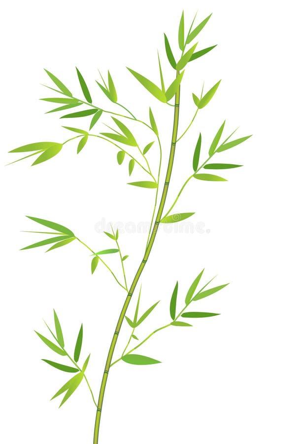 bamboo ветвь иллюстрация штока